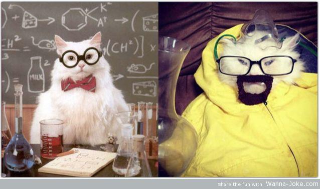 Walter White cat breaking bad
