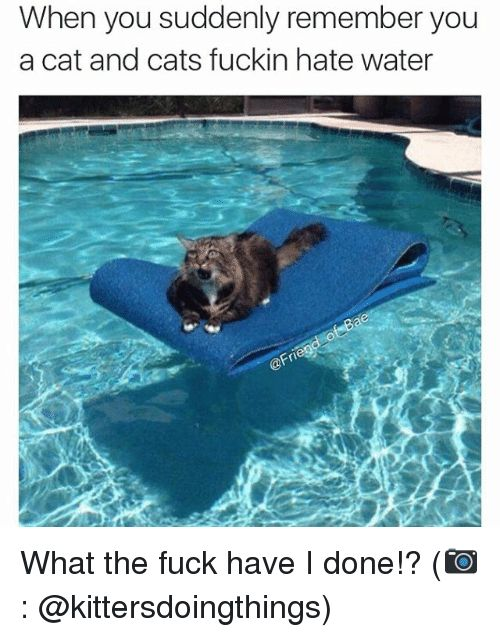 Take the Suprising Funny Cat and Water Memes