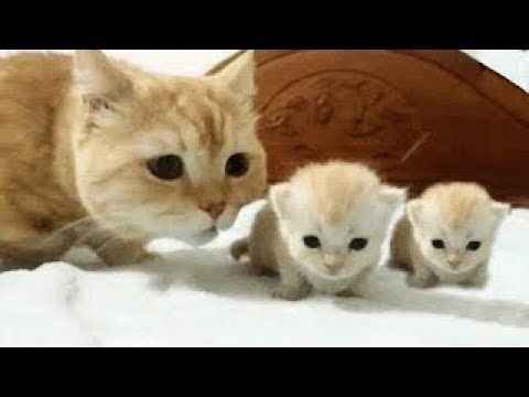 Cute Cats And Kittens & Kitty videos pilation 2018