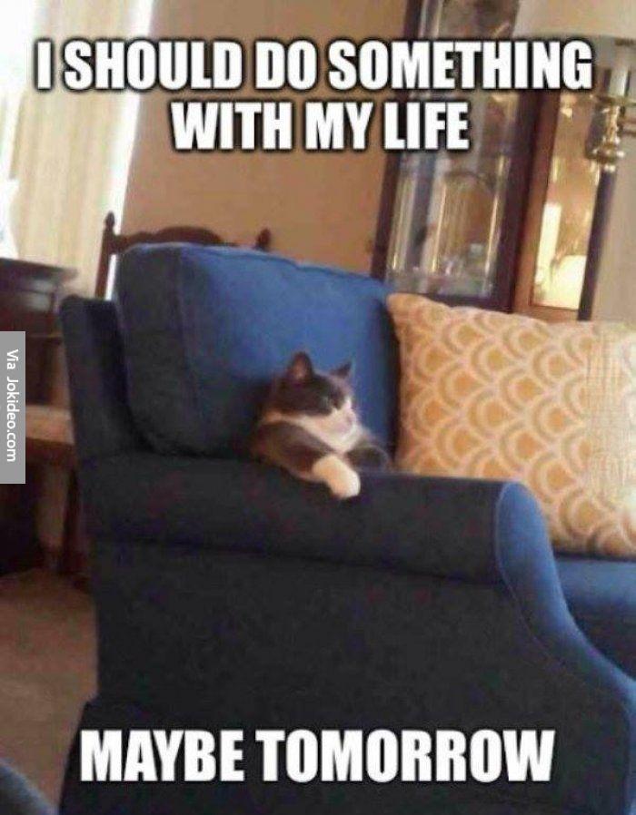 Funny cat meme 2