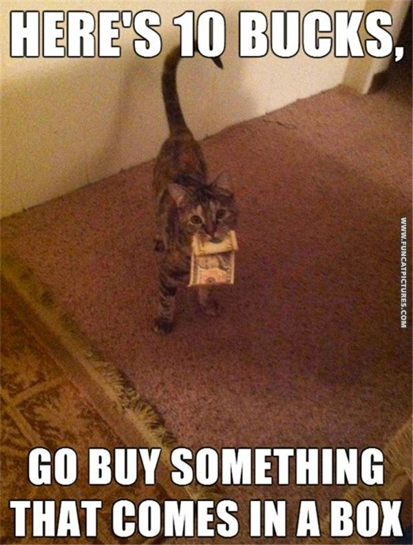 What cats would do with money