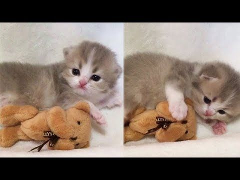 Try not to LAUGH or SMILE – Funny Cats and Cute Kittens Videos 13