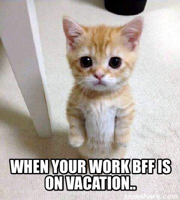 Cute Sad Cat Meme meme generator When your work bff is on vacation