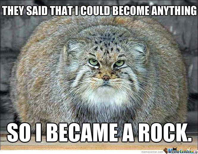 Fat Cat Be es A Rock