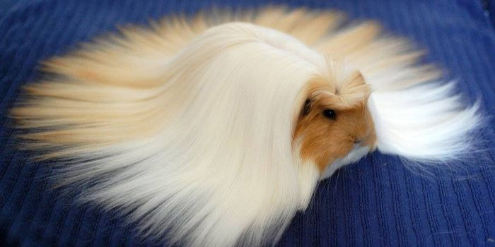 84 Animals With Majestic Hair