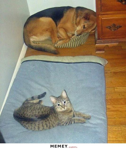 Dog Sleeping In The Cats Bed