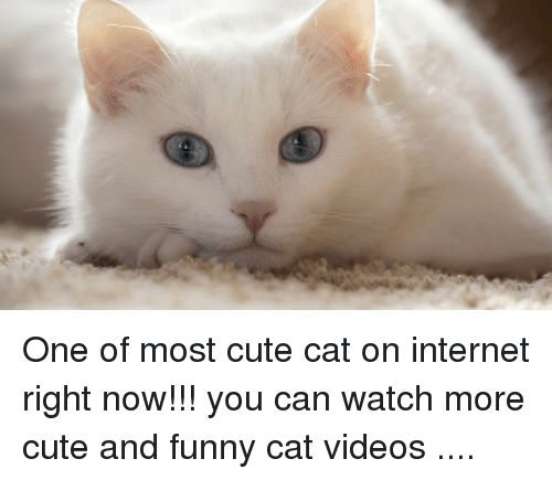 Take the Suprising Most Funny Cat Pictures