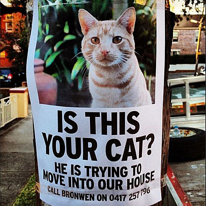 funny missing cat poster