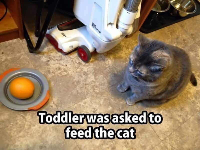 Funny Cute Funny Kids Cute Funny Animals Funny Toddler Funny s