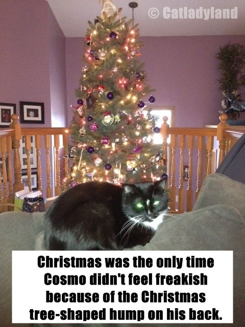 Merry Christmas from Catladyland