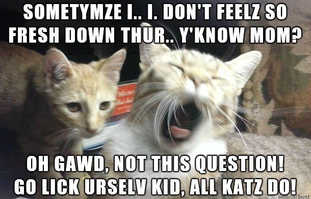 Kitten asks the Question