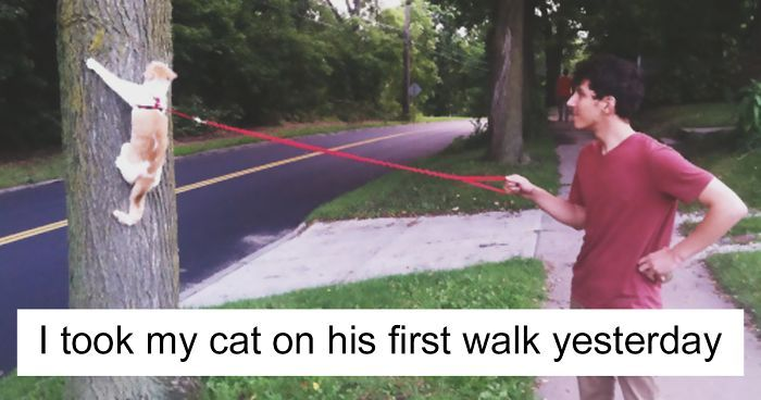 136 Cat Posts Tumblr That Are Impossible Not To Laugh At Funny