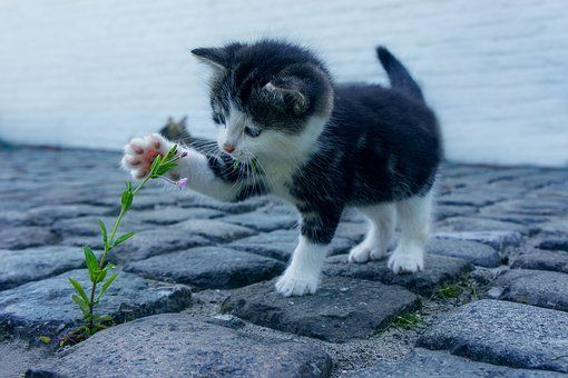 Cat Flower Kitten Stone Pet Animals