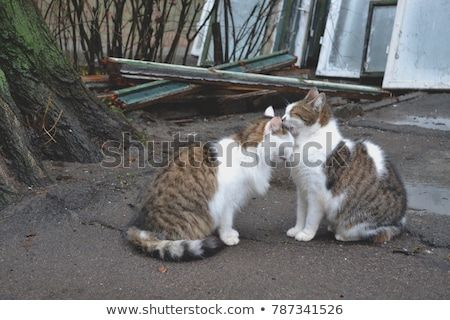 Cute cats in love Street cats Funny cats in the street Cats are