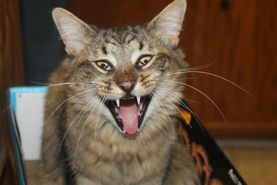 Funny kitty memes f