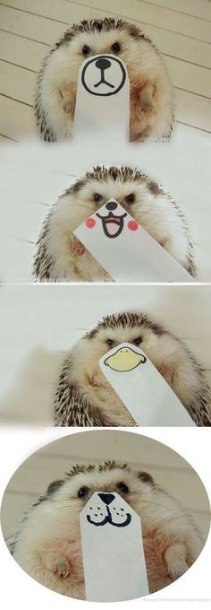 Lil hedgehog Baby Animals Funny Animals Cute Animals Many Faces Beautiful Creatures