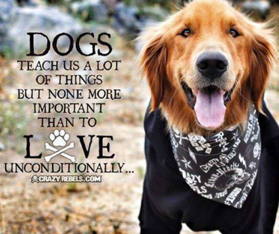 dog quotes loyalty