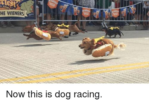 Take the Unbelievable Funny Fourth Of July Dog Memes