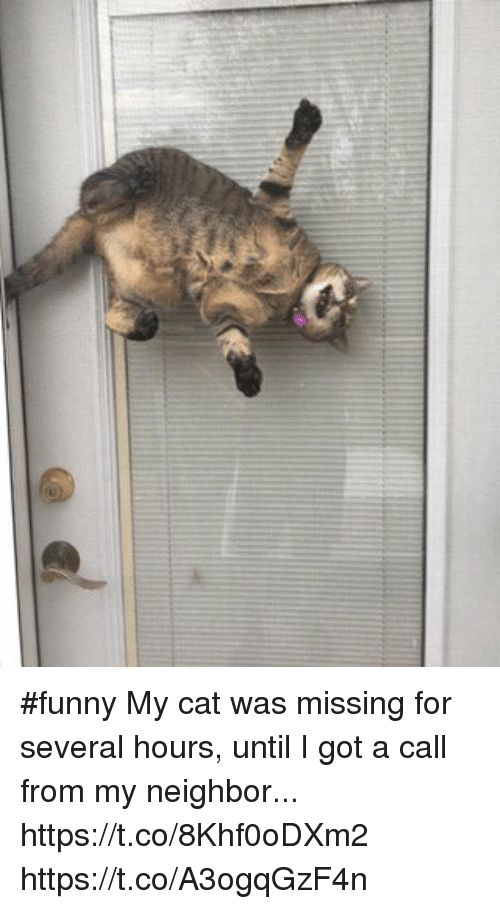 Funny Memes and 🤖 funny My cat was missing for several hours