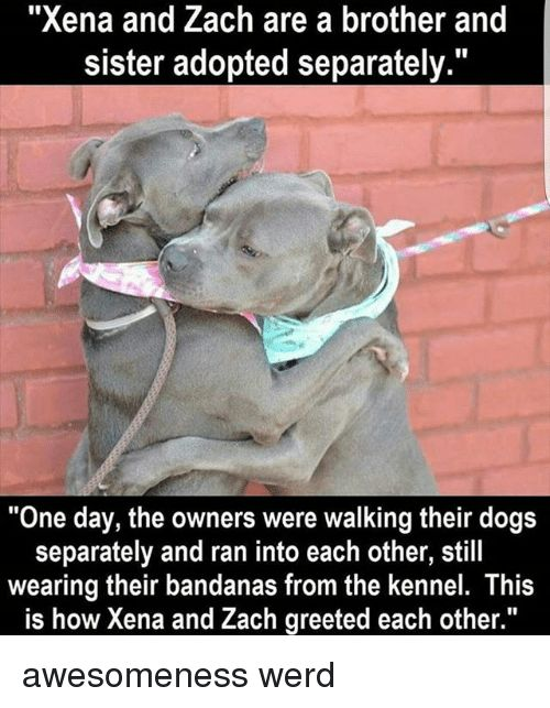 "Dogs Memes and Awesomeness ""Xena and Zach are a brother and sister"
