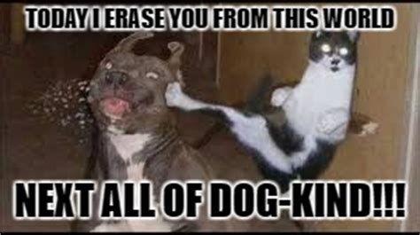 Funny cat dog memes 300x168 Funny cat vs dog memes