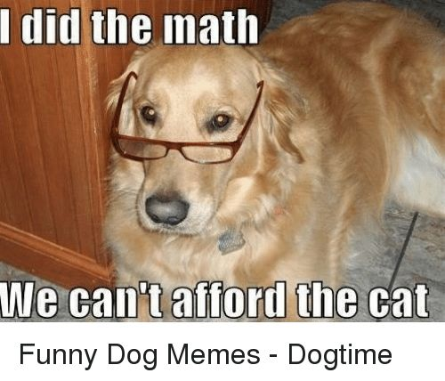 Cats Dogs and Funny did the math We can tafford the cat Funny