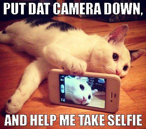 Selfie Cat Meme