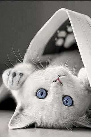 I remember a great cat named Purity White with blue eyes❤️