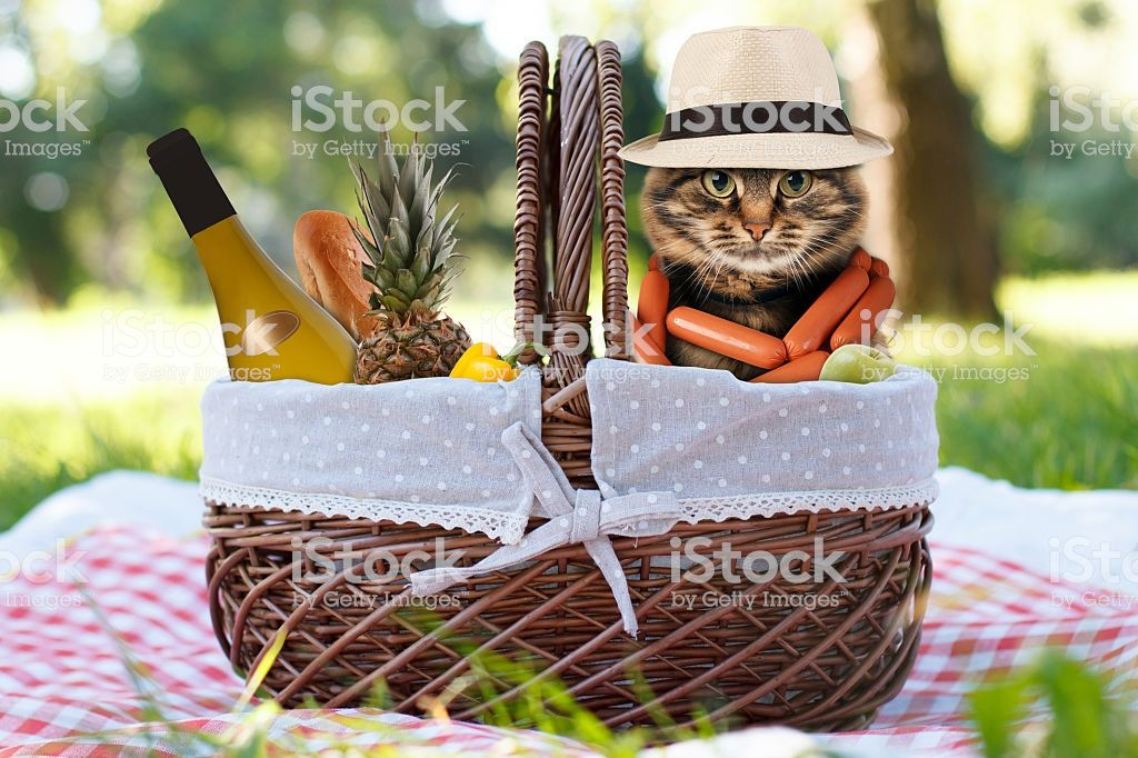 Funny cat on a picnic Beautiful summer day Stock image