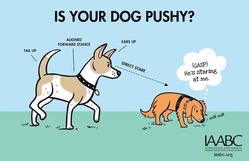 Can you tell if a dog is being pushy How about when they are intimidated by another dog Recognizing these important canine behavior clues