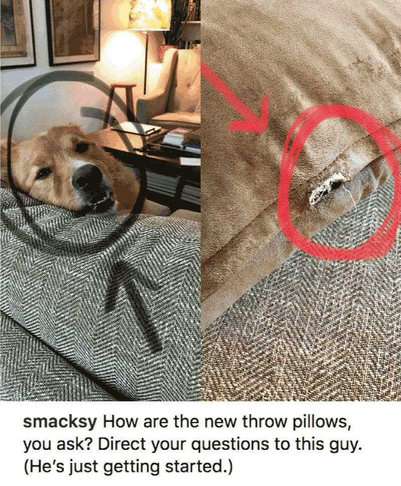Take the Unique Funny Dog Pillow Pictures