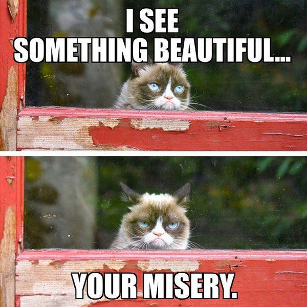 i see something beautiful meme posted by joemo7384 Grumpy Cat