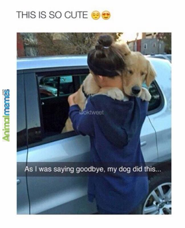 Dog memes Saying goodbye to my dog Dog memes