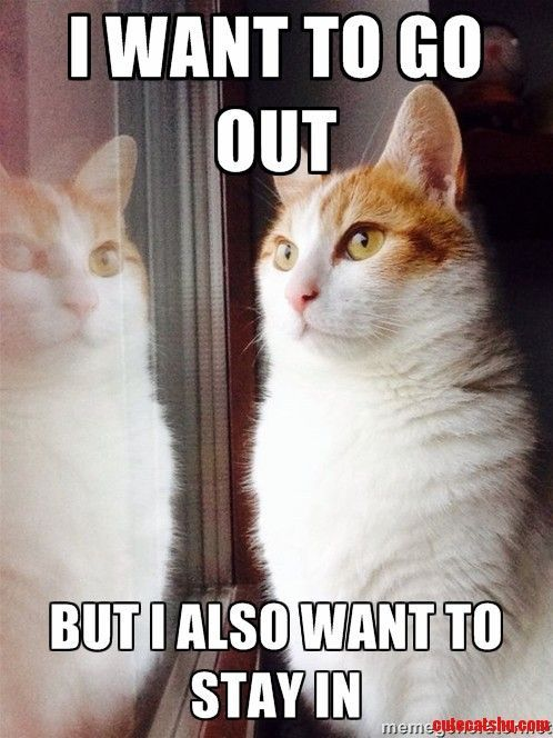 Top 30 Funny Cat Memes Quotes And Humor