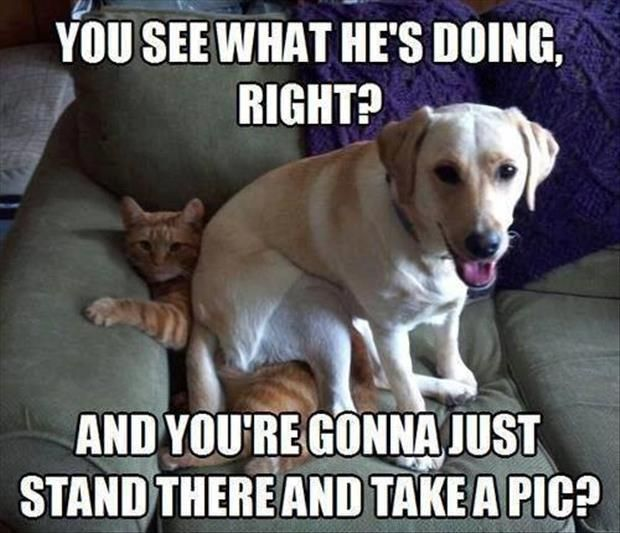 Funny Dog and Cat Fighting Cats