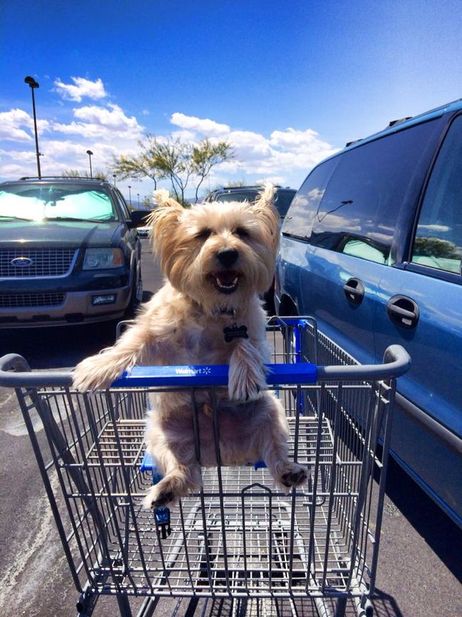 I goe s wiff s Mom shoppin but s I never s s tu ride s in a cart likes this guy did s Frisbee Bradley 19 Dogs love to go shopping