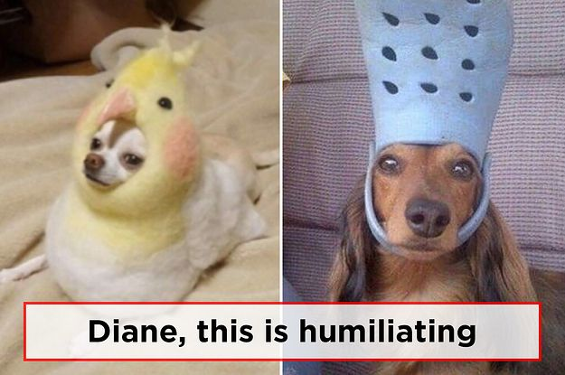 just 33 hilarious dog memes 2 1 dblbig