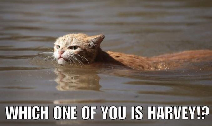 Funny Harvey cat meme of angry cat looking for the one named Harvey