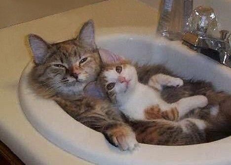 Take the Wonderful Funny Neko Cat Girl Memes