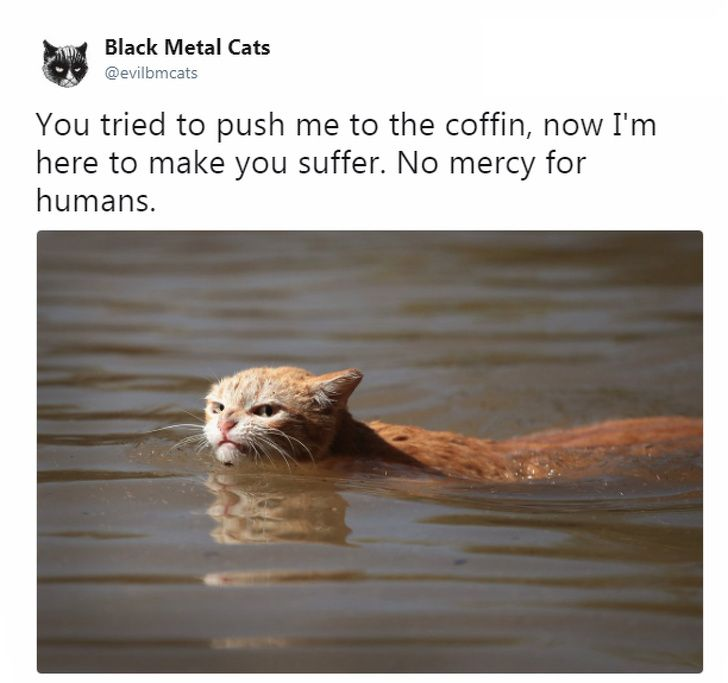 A Twitter Account Pairs Cat Pics and Metal Lyrics To her and the Result Is Too Funny for Words