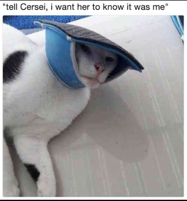 Watch the Awesome Funny Cat Game Memes