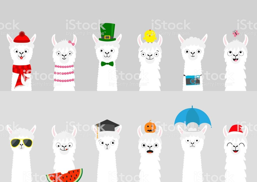 Cute cartoon funny lama character All seasons Happy Valentines Christmas St Patrick day Easter Egg Chicken Bird Umbrella Santa hat sun Flat design Gray
