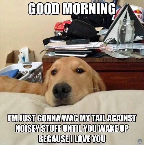 Morning I Love Dogs Cute Dogs Funny Dogs Silly Dogs Baby Dogs