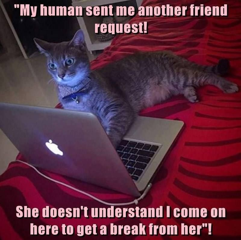 Watch the Awesome Funny Dramatic Cat Memes Clean