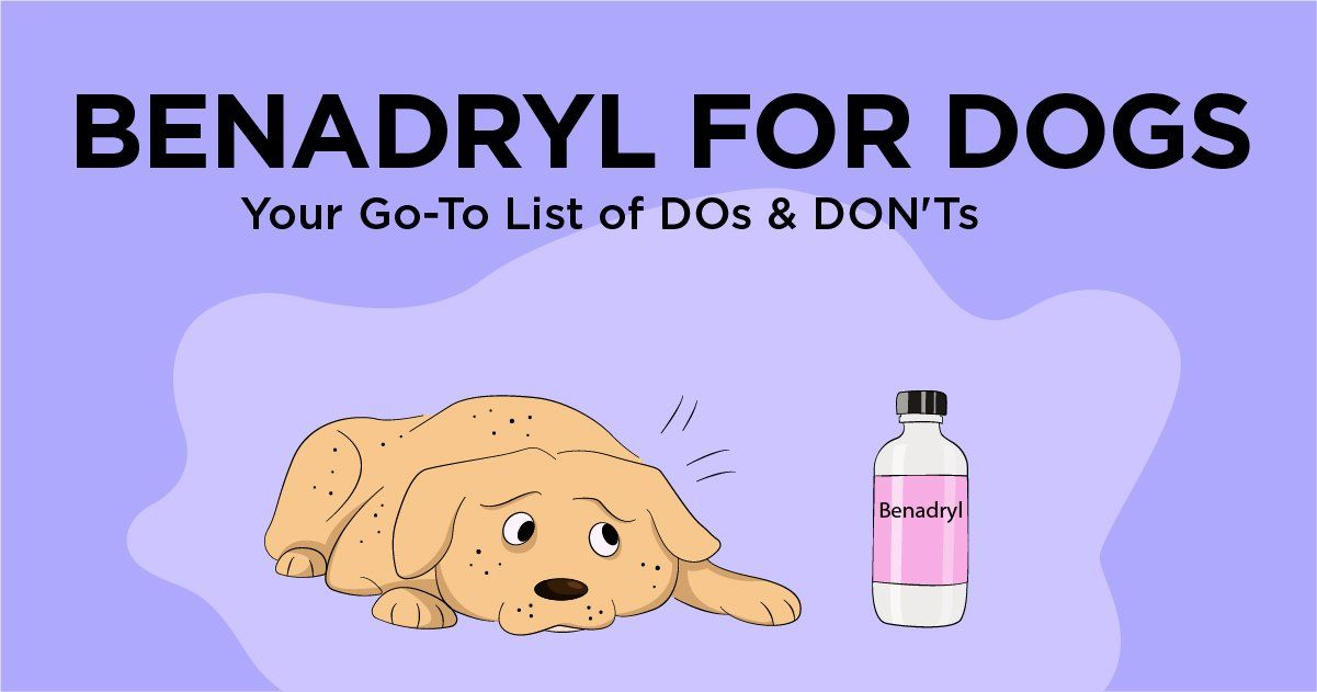 Benadryl for Dogs Your Go To List of DOs & DON Ts