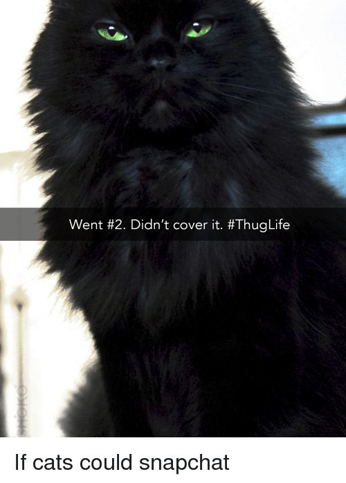 Watch the Awesome Funny Thug Cat Memes