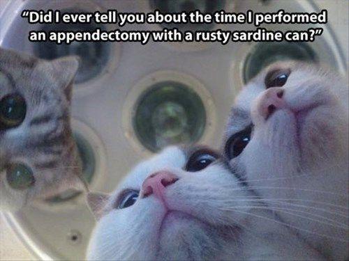 Cats funny surgery vets