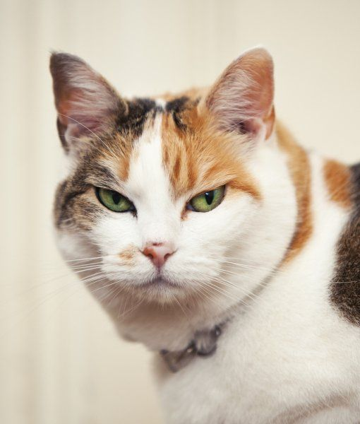 What Makes Cats Unhappy
