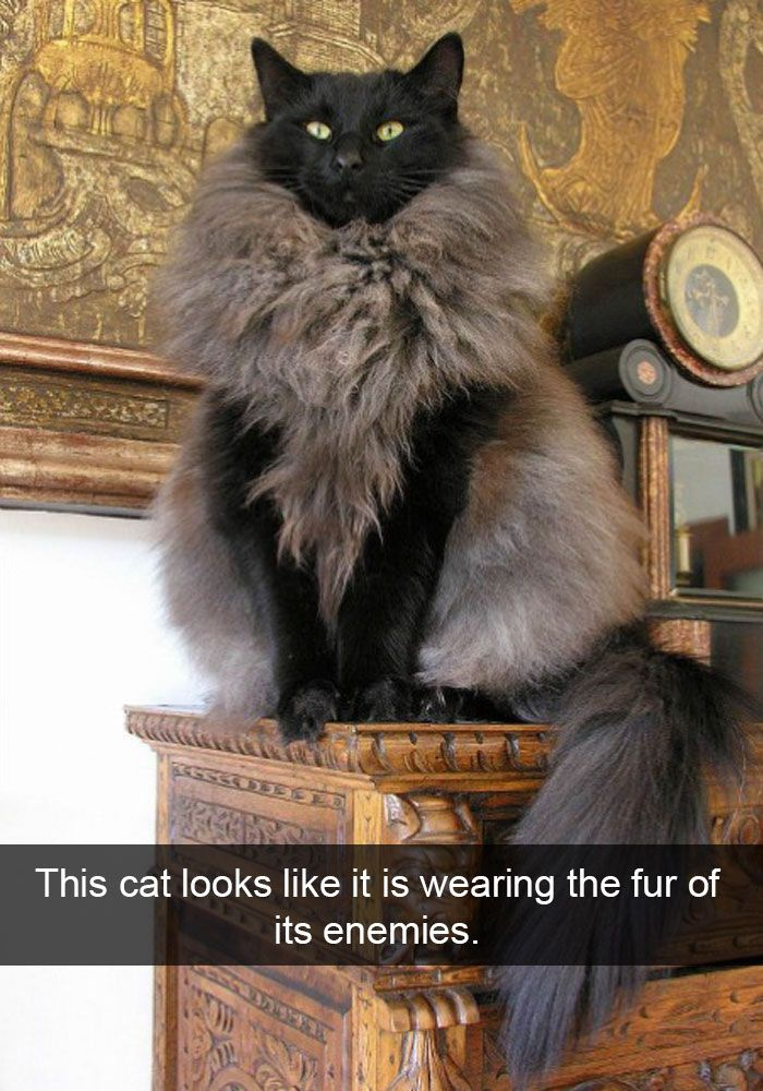 24 hilarious cat snapchats that will make your day instantly better 16