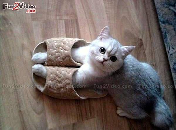 Cute Kitten Beautiful Picture